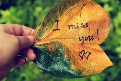 我想念您老叶子的 库存照片