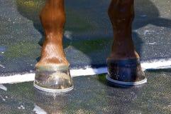 我新的爱尔兰Danzing鞋子 免版税库存照片