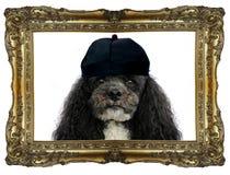 我是汤姆国王 免版税库存照片