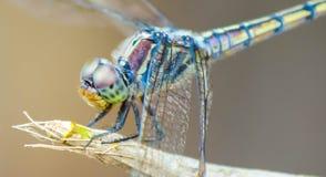 我是蜻蜓, 库存照片
