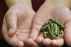我朋友的蛙 免版税库存照片
