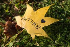我爱在叶子写的秋天 免版税库存照片