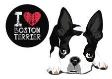 我爱波士顿狗传染媒介 库存图片