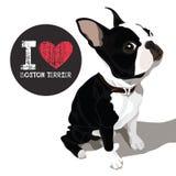 我爱波士顿狗 免版税库存照片