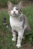 我爱的猫 库存图片