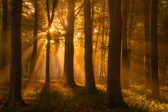我爱的秋天 免版税库存照片