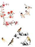 我的书刊上的图片--李子开花、石头和鸟 图库摄影