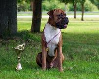 我的喜爱狗 免版税库存照片