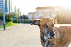 我的在日落的狗画象  免版税图库摄影