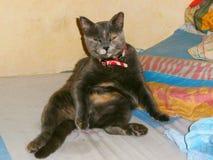 我的在alchol的猫 免版税库存照片
