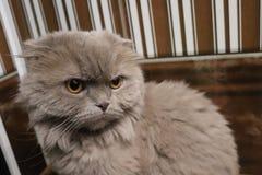 我的宠物是我的猫 图库摄影