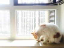 我的宠物猫 库存照片