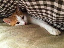 我的宠物猫 免版税库存图片