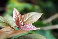 从我的庭院拍的照片,有美丽的叶子的植物 免版税库存图片