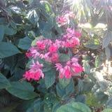 从我的庭院的花 免版税库存照片