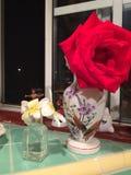 从我的庭院的花 免版税库存图片