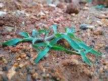 我的庭院绿色叶子爬行物Pic  免版税库存照片