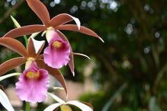 我的庭院美丽的兰花花  免版税库存图片