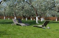 我的开花苹果庭院和松弛地方 库存照片