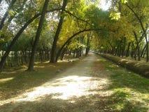 我的村庄美丽的景色  免版税库存图片