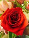 从我的爱的一朵可爱的红色玫瑰 库存照片