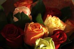 我的爱的天鹅绒玫瑰 库存照片