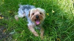 我的狗的一个早晨好 免版税库存图片