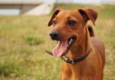 我的狗里科,我的最好的朋友 库存照片