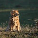 我的狗 免版税图库摄影