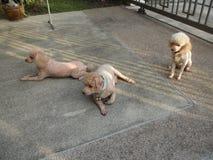 我的狗 免版税库存照片
