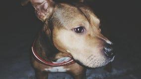 我的狗 免版税库存图片
