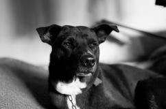我的狗 库存图片