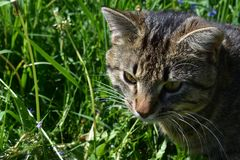 我的猫是宠物 免版税库存照片
