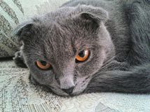 我的猫的眼睛 免版税图库摄影
