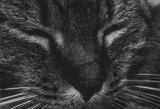 我的猫 库存图片