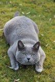 我的猫 免版税库存照片