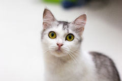 我的猫 图库摄影