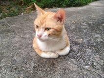 我的猫 库存照片