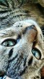 我的猫Mufasa 免版税库存照片
