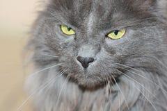 我的猫Pur 免版税图库摄影