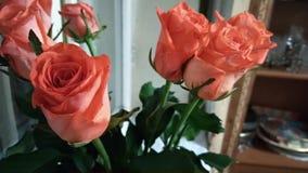 我的祖母的美丽的玫瑰 库存照片