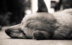 我的老狗 免版税库存照片