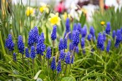 我的蓝色花在我美妙的庭院里 免版税库存图片