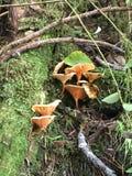 我的蘑菇topia 库存图片