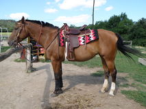 我的马 免版税库存照片