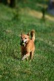 我美丽的狗 库存图片