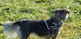 我自己的狗狗自然 免版税库存照片