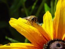 我蜂的蜂蜜 库存照片