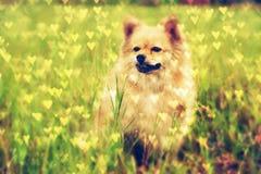 我逗人喜爱的宠物 免版税图库摄影