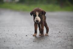我逗人喜爱&小的小狗 图库摄影